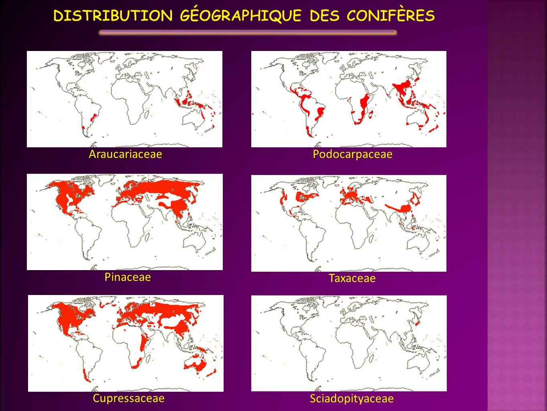 Distribution géographique des conifères