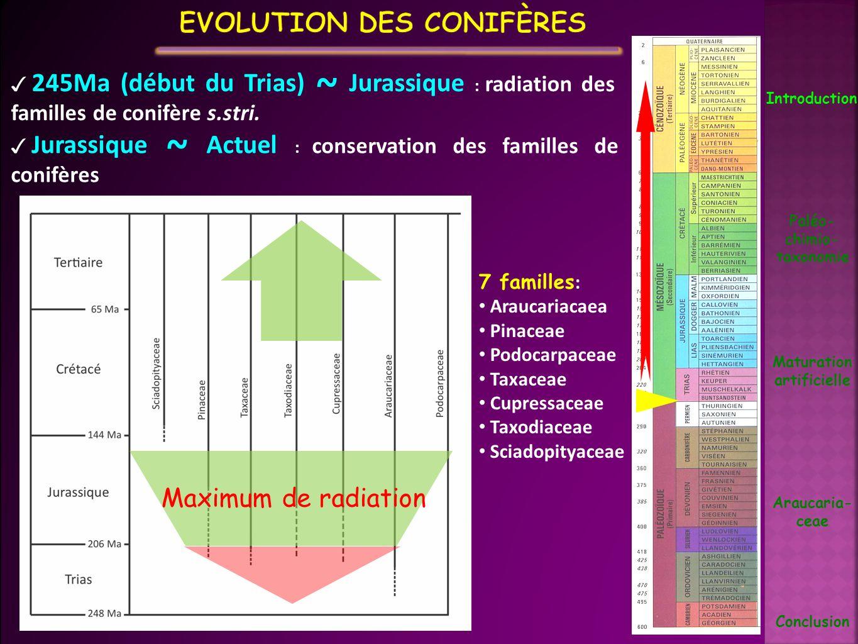 Evolution des conifères