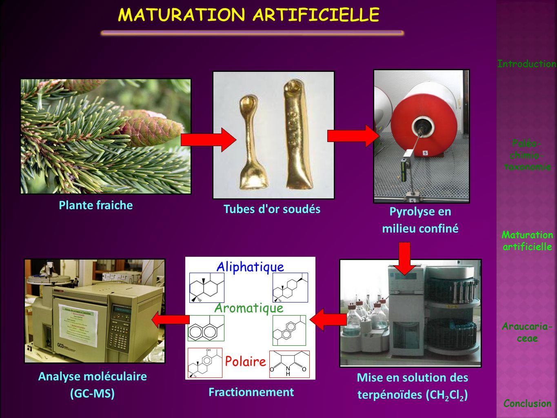 Maturation artificielle