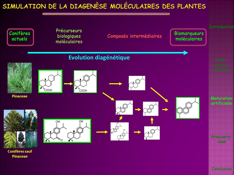 Simulation de la diagenèse moléculaires des plantes