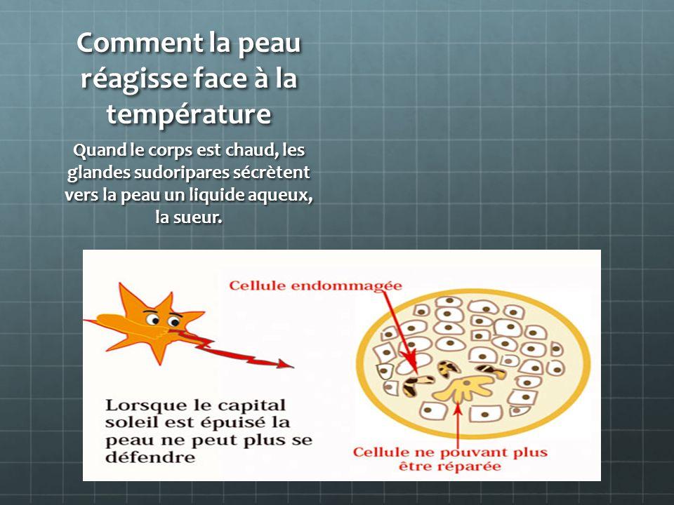 Comment la peau réagisse face à la température