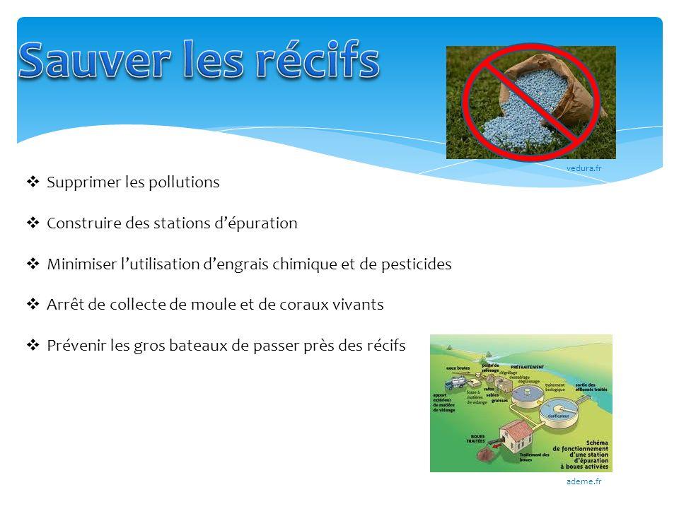 Sauver les récifs Supprimer les pollutions
