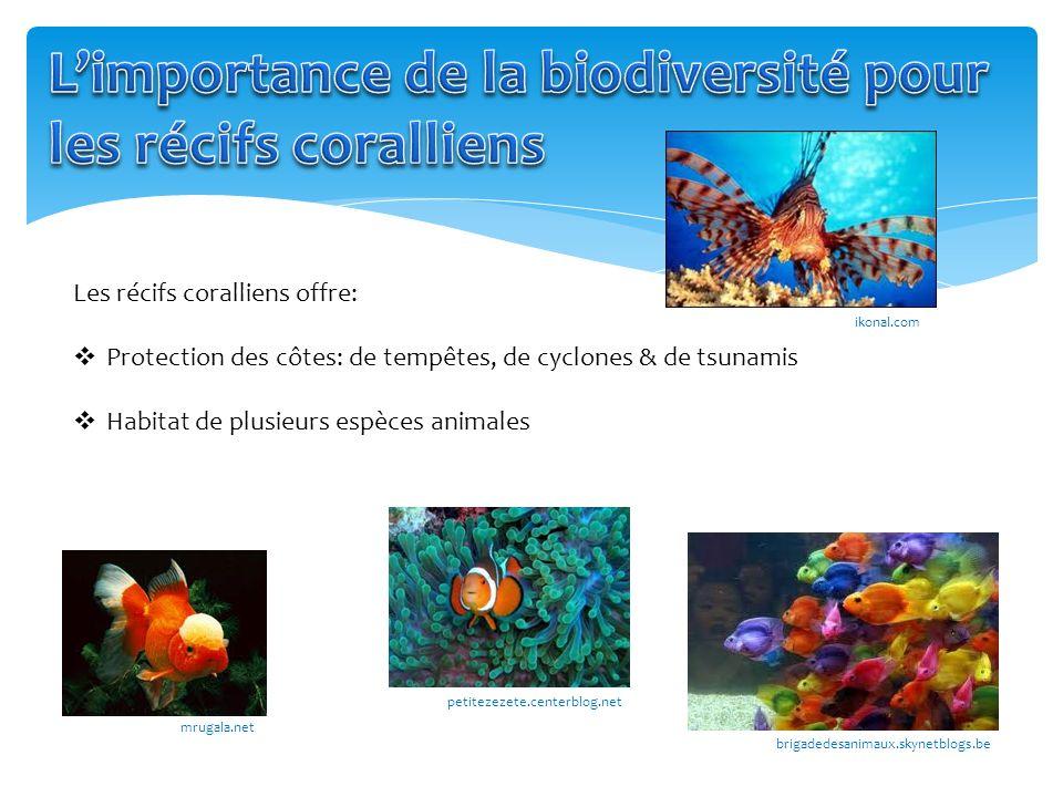 L'importance de la biodiversité pour les récifs coralliens