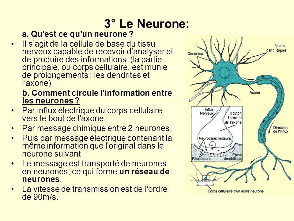 3° Le Neurone: a. Qu est ce qu un neurone