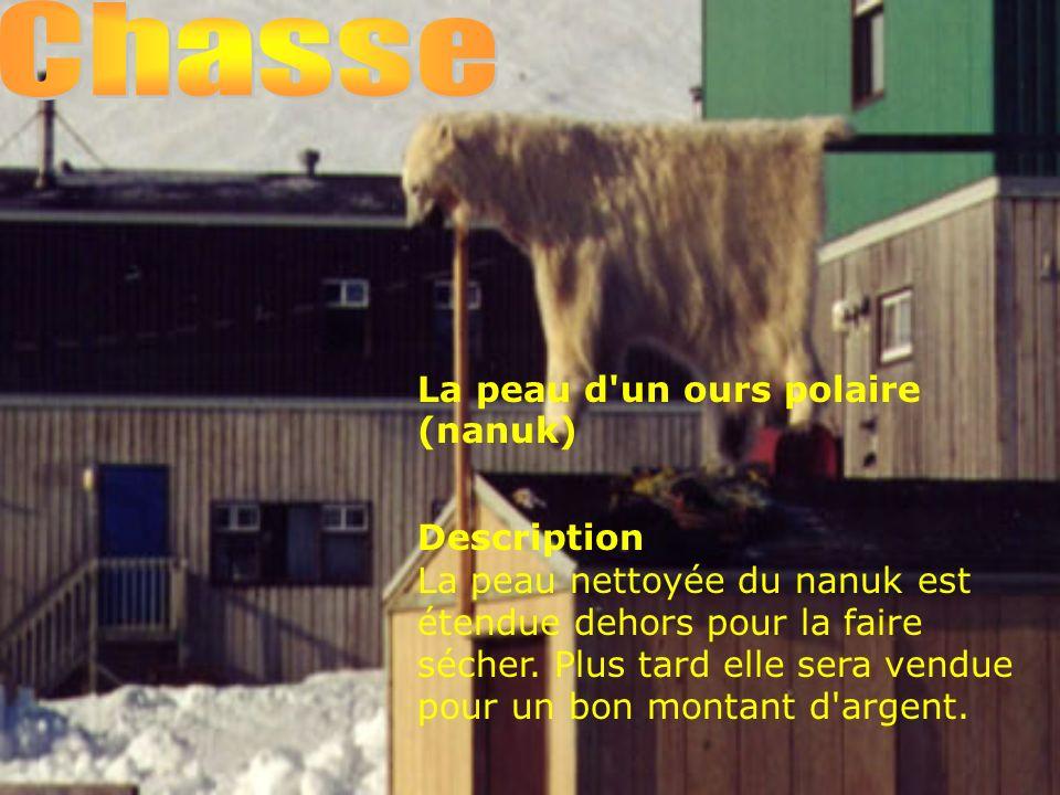 Chasse La peau d un ours polaire (nanuk)