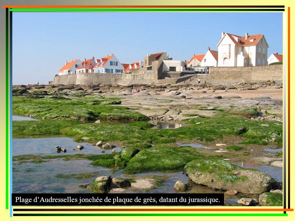 Plage d'Audresselles jonchée de plaque de grès, datant du jurassique.