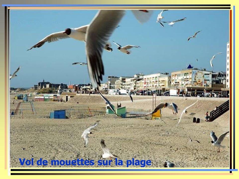 Vole de mouettes sur la plage