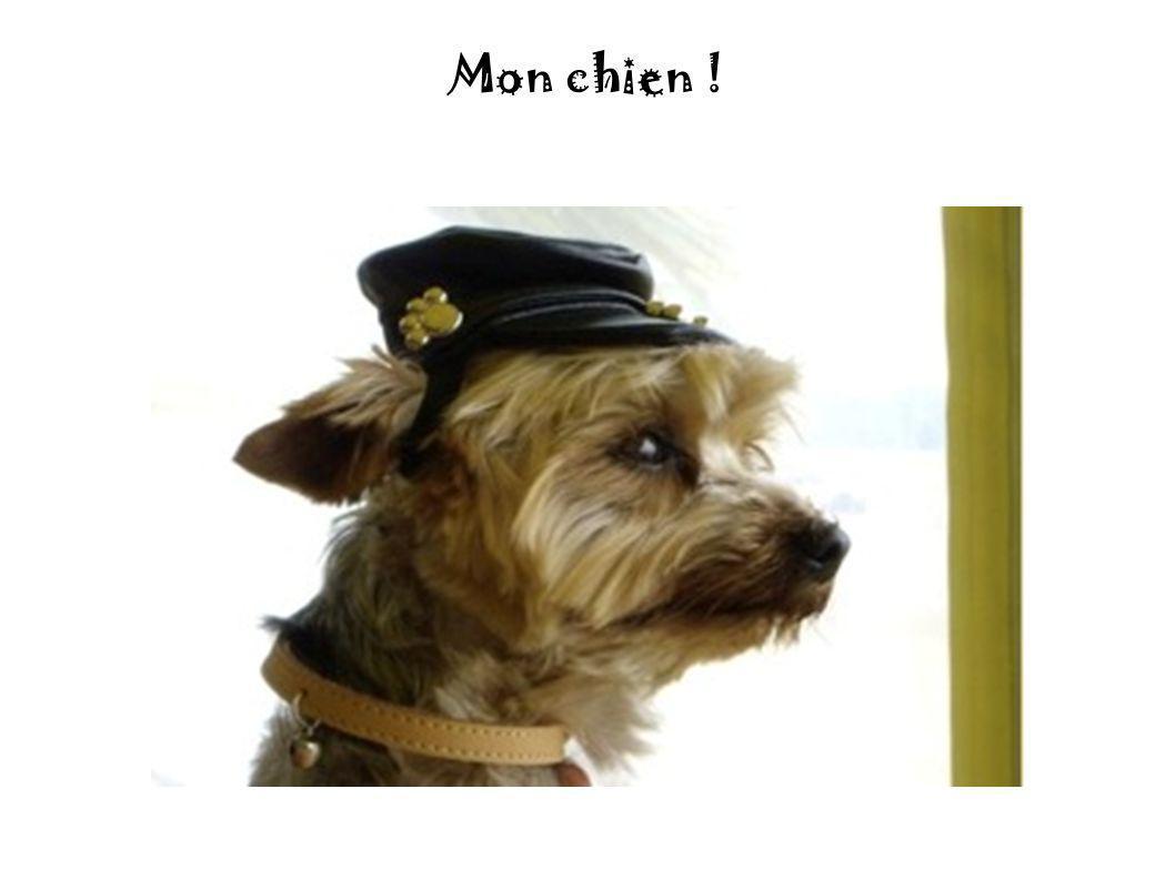 Mon chien !