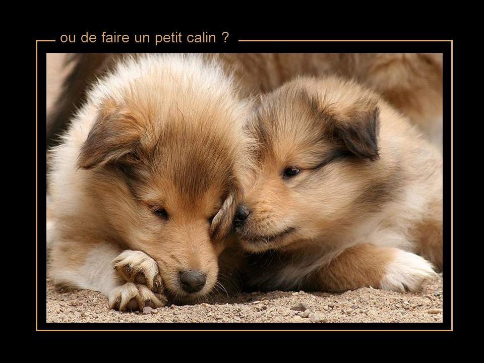 ou de faire un petit calin