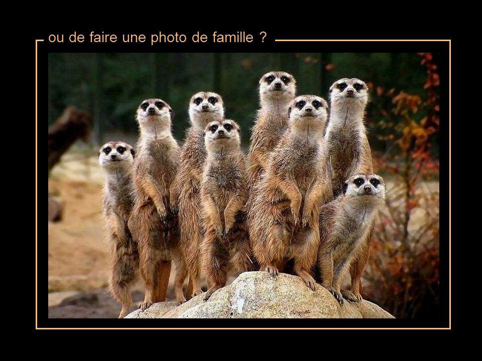 ou de faire une photo de famille