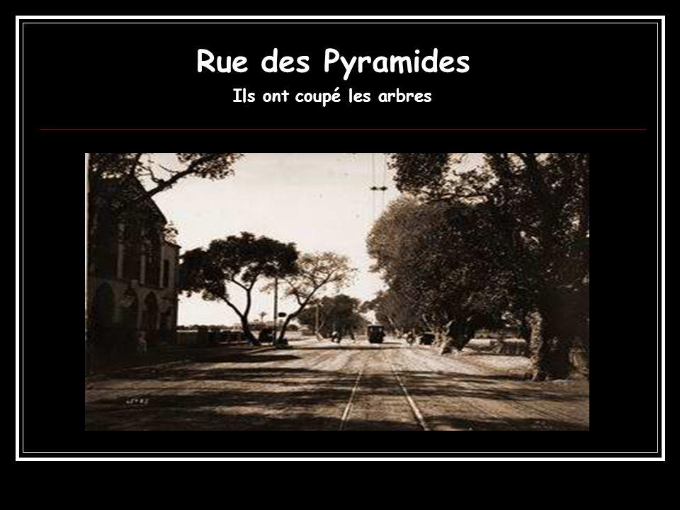 Rue des Pyramides Ils ont coupé les arbres