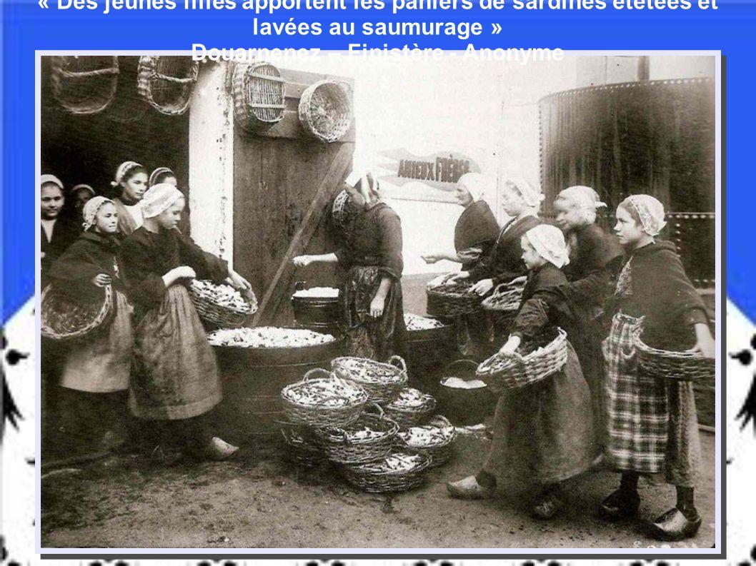 « Des jeunes filles apportent les paniers de sardines étêtées et lavées au saumurage » Douarnenez – Finistère - Anonyme