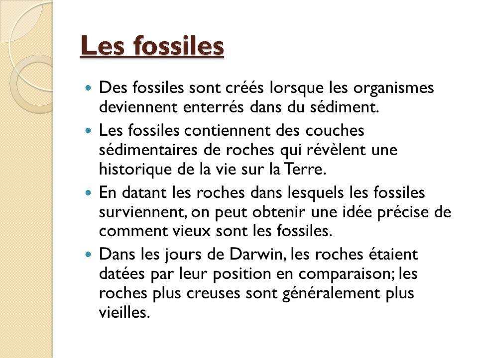 Les fossiles Des fossiles sont créés lorsque les organismes deviennent enterrés dans du sédiment.