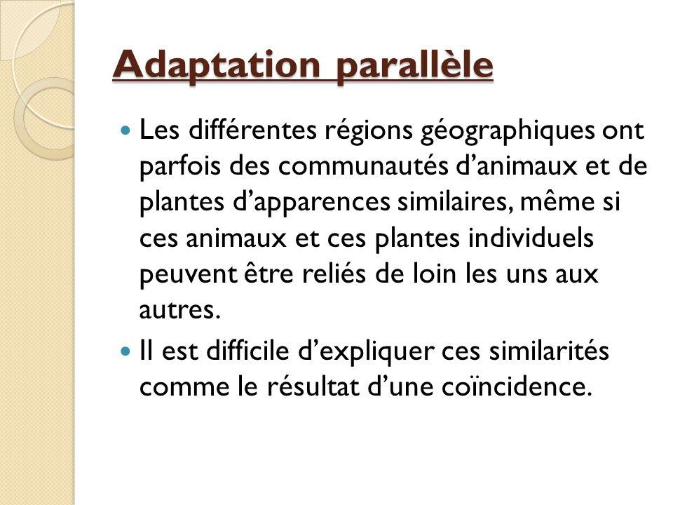 Adaptation parallèle