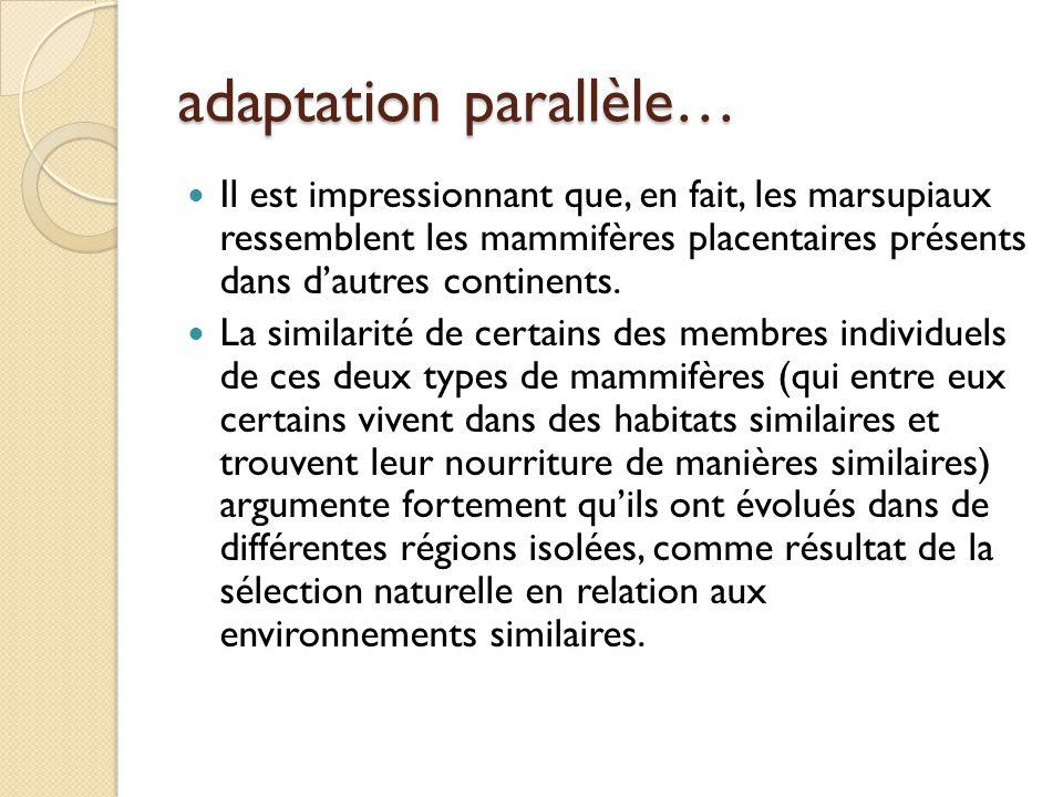 adaptation parallèle…