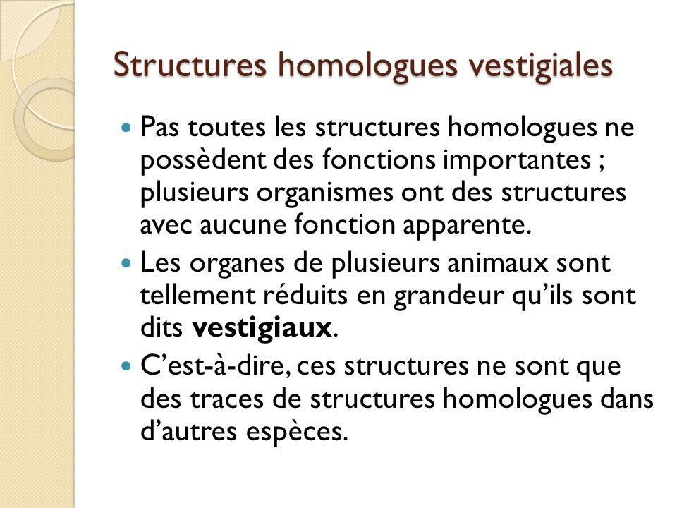 Structures homologues vestigiales