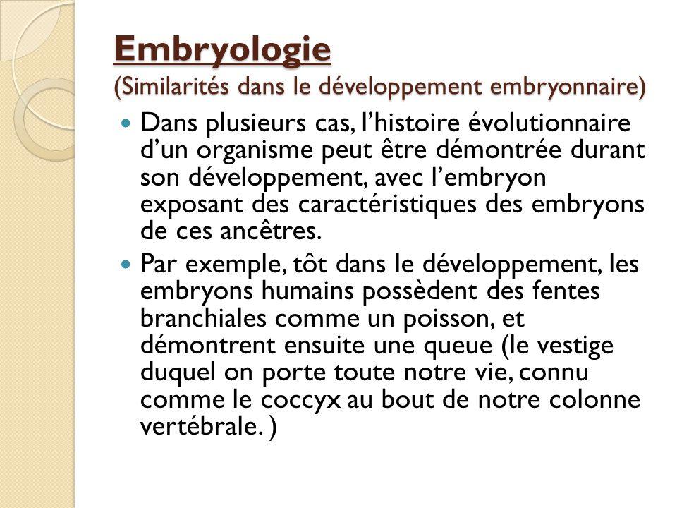Embryologie (Similarités dans le développement embryonnaire)
