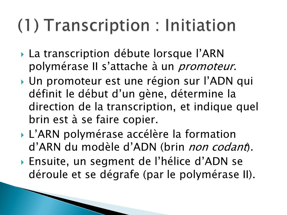 (1) Transcription : Initiation
