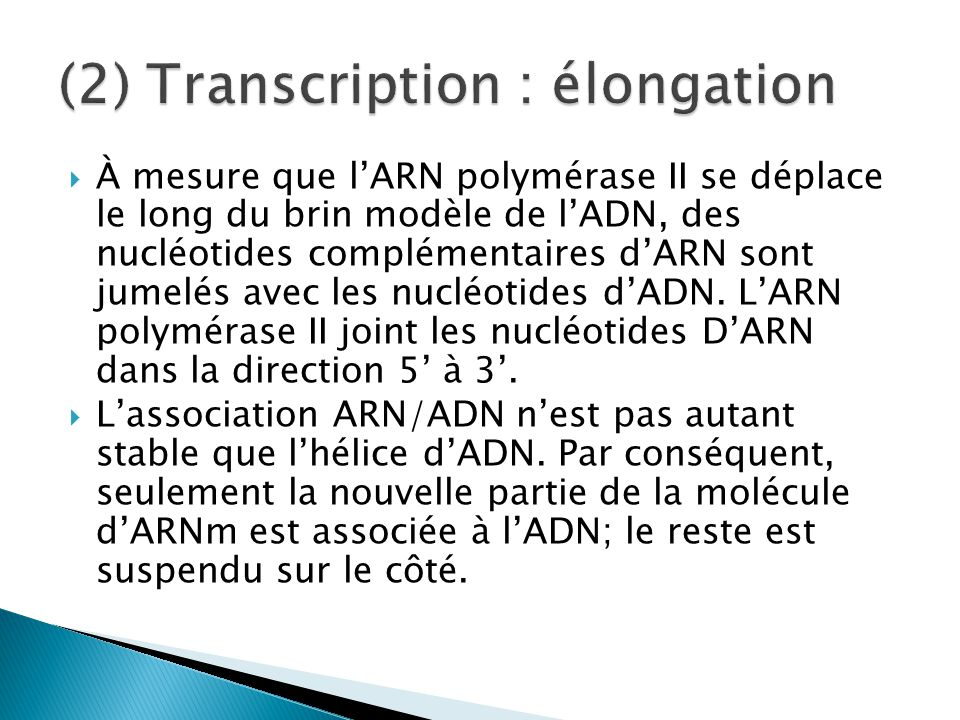 (2) Transcription : élongation