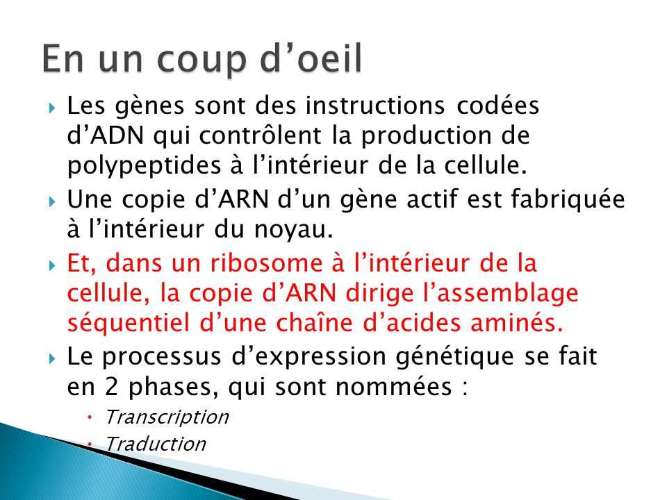 En un coup d'oeil Les gènes sont des instructions codées d'ADN qui contrôlent la production de polypeptides à l'intérieur de la cellule.