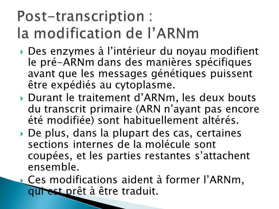 Post-transcription : la modification de l'ARNm