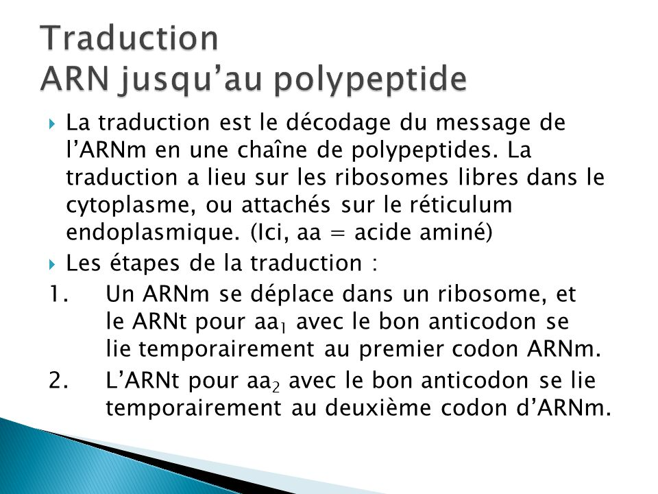 Traduction ARN jusqu'au polypeptide