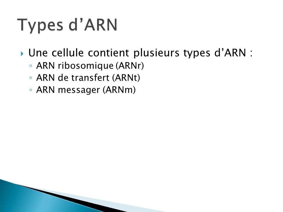 Types d'ARN Une cellule contient plusieurs types d'ARN :