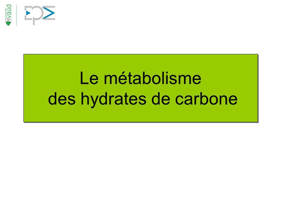 Le métabolisme des hydrates de carbone
