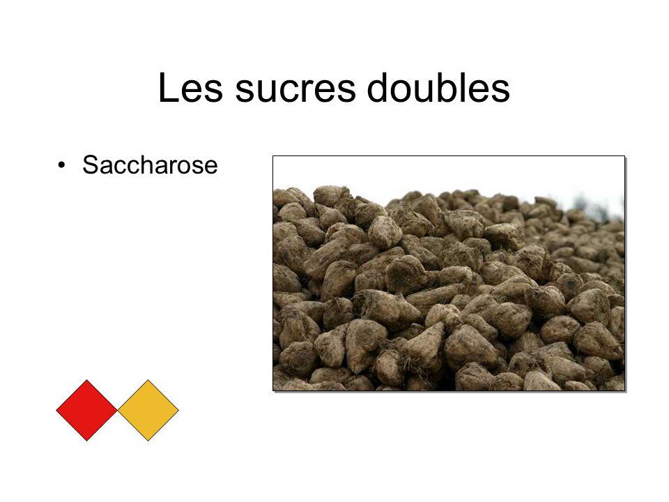 Les sucres doubles Saccharose