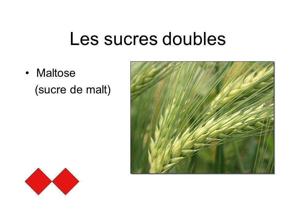 Les sucres doubles Maltose (sucre de malt)