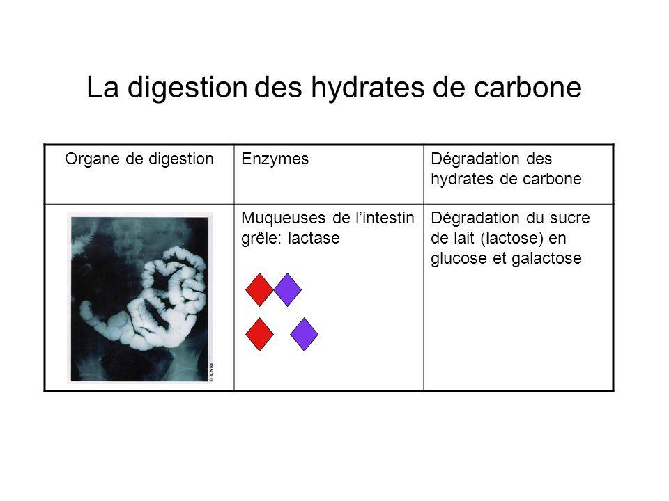 La digestion des hydrates de carbone