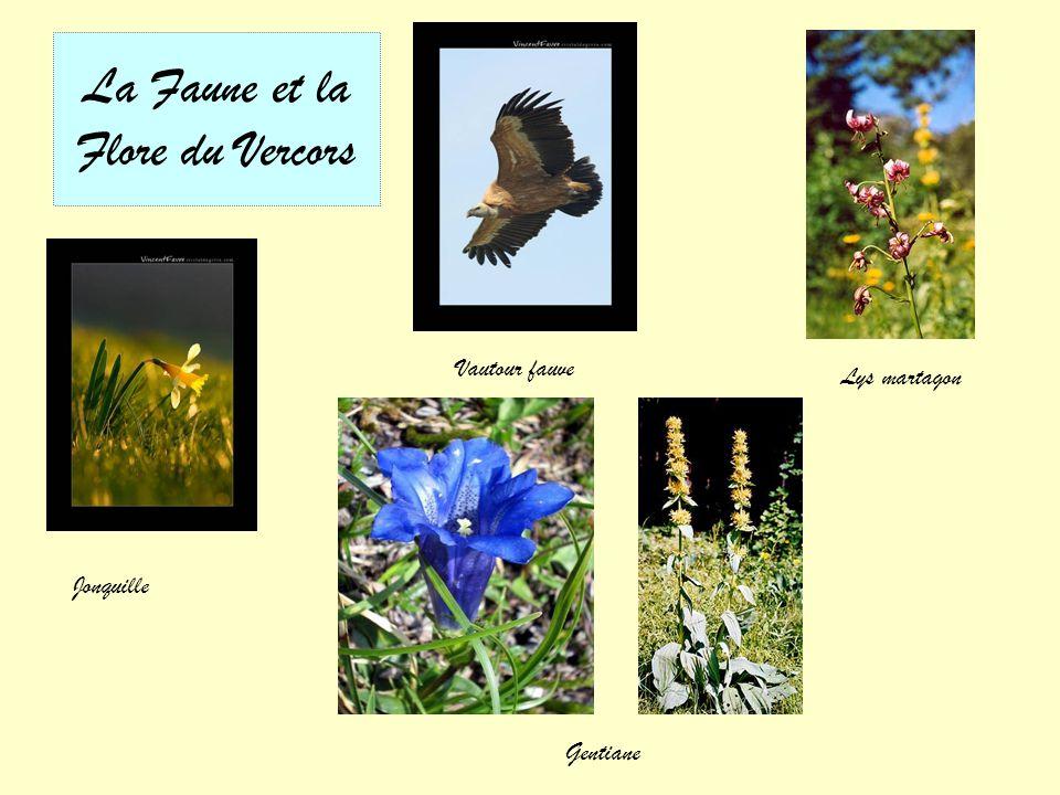 La Faune et la Flore du Vercors