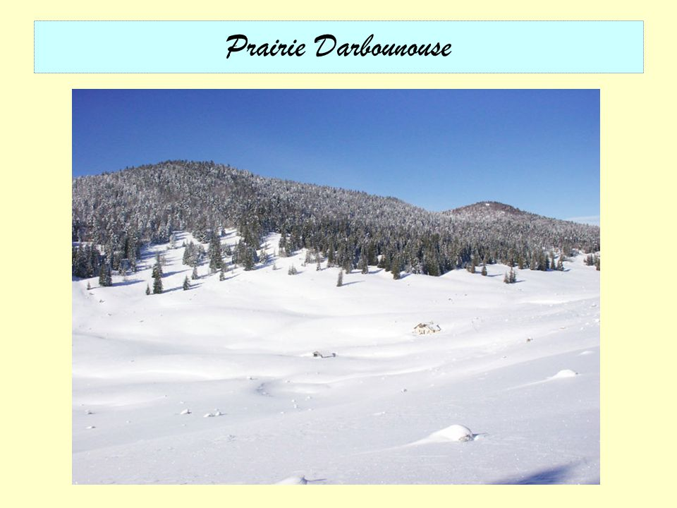 Prairie Darbounouse