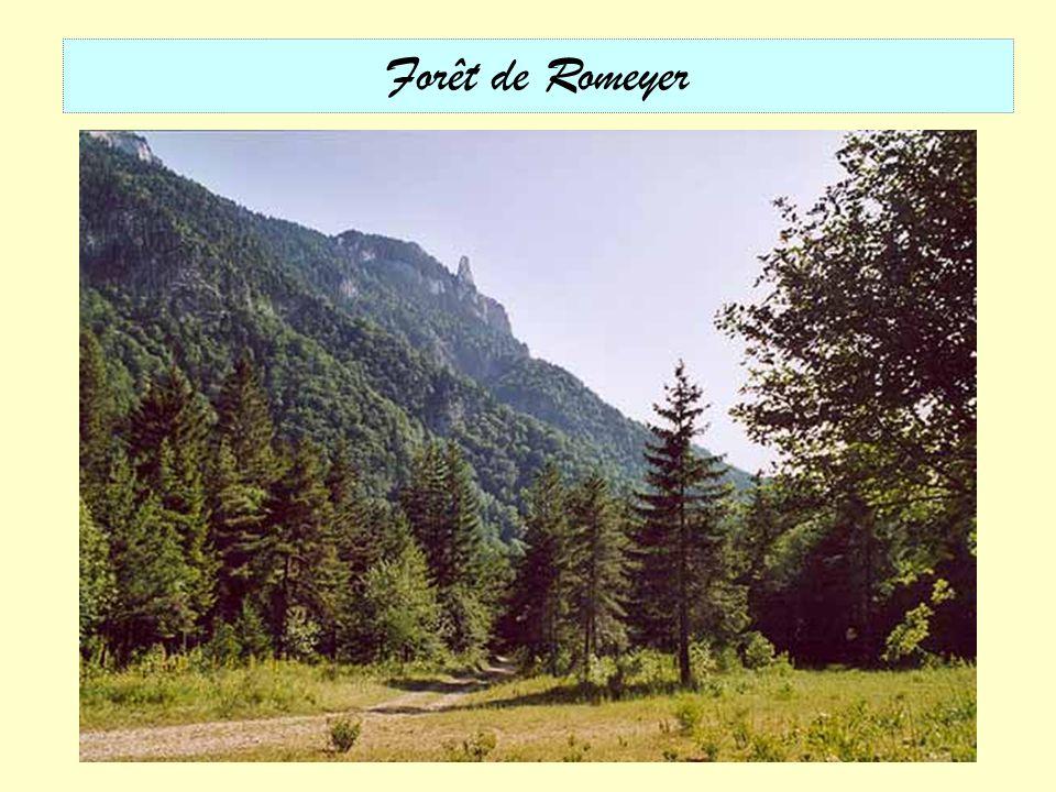 Forêt de Romeyer