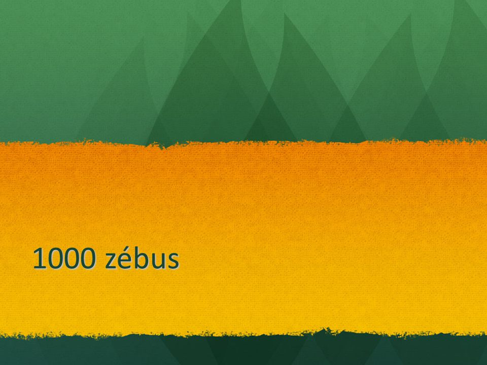 1000 zébus