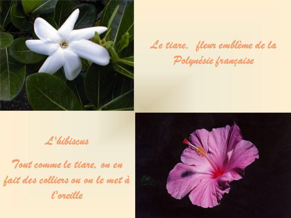 Le tiare, fleur emblème de la Polynésie française