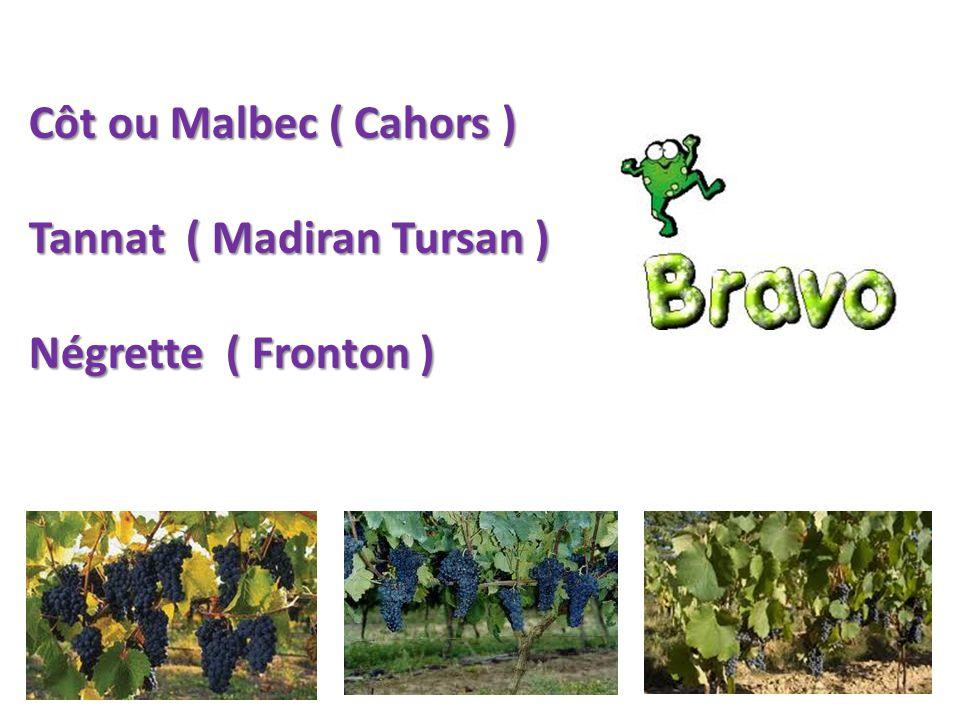 Côt ou Malbec ( Cahors ) Tannat ( Madiran Tursan ) Négrette ( Fronton )