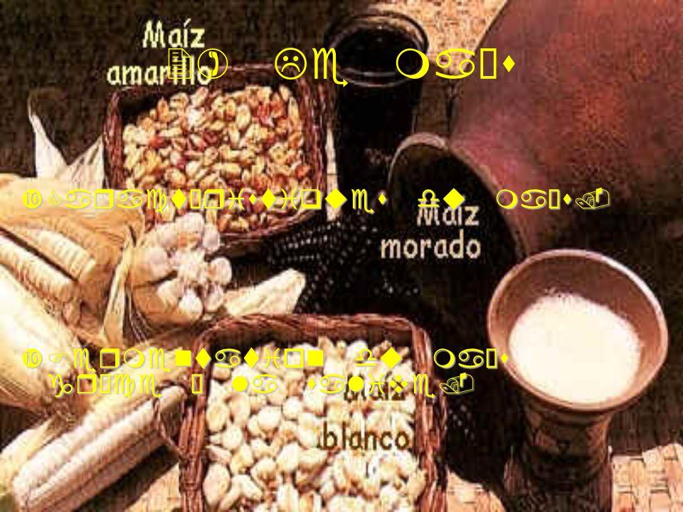 2) Le maïs Caractéristiques du maïs.