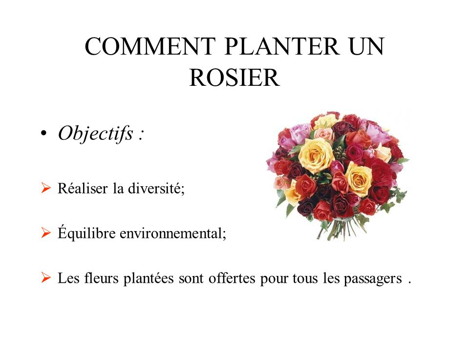 COMMENT PLANTER UN ROSIER