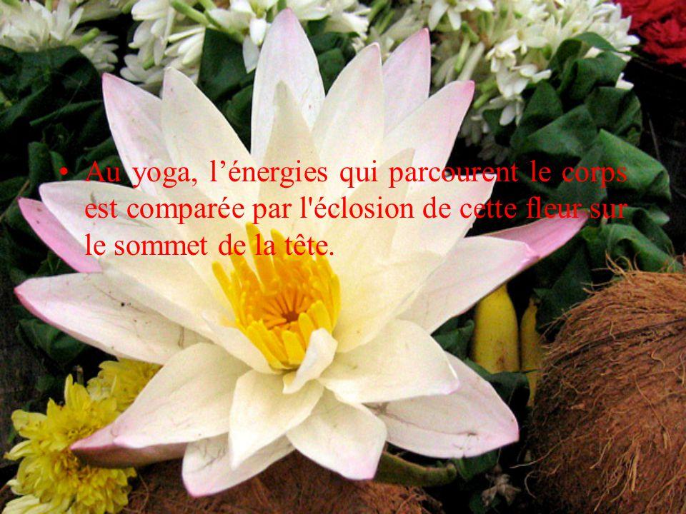 Au yoga, l'énergies qui parcourent le corps est comparée par l éclosion de cette fleur sur le sommet de la tête.