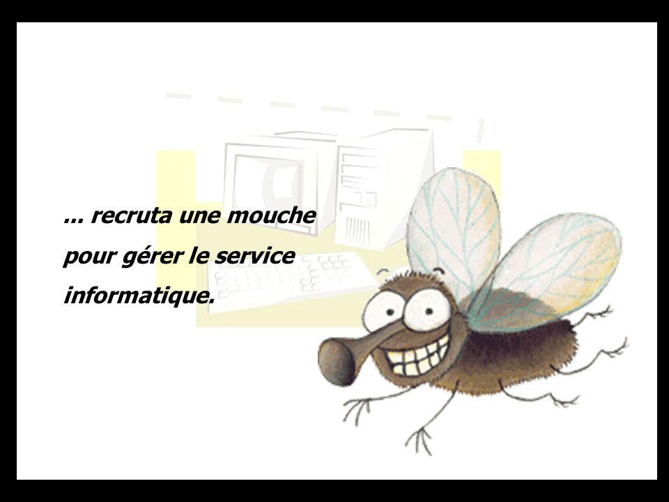 ... recruta une mouche pour gérer le service informatique.