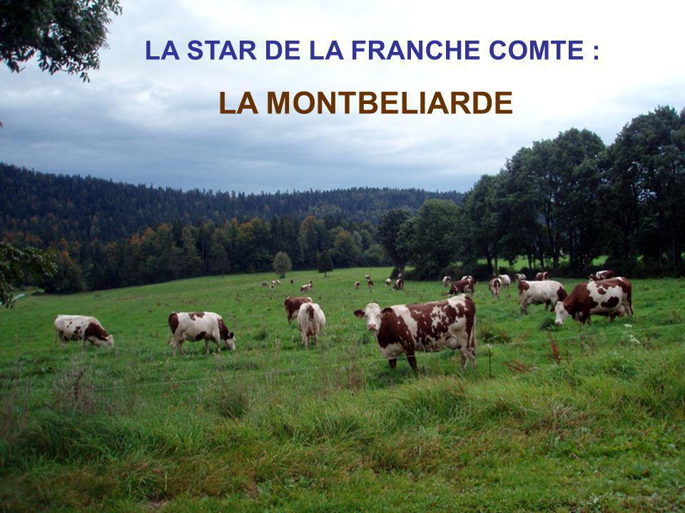LA STAR DE LA FRANCHE COMTE :