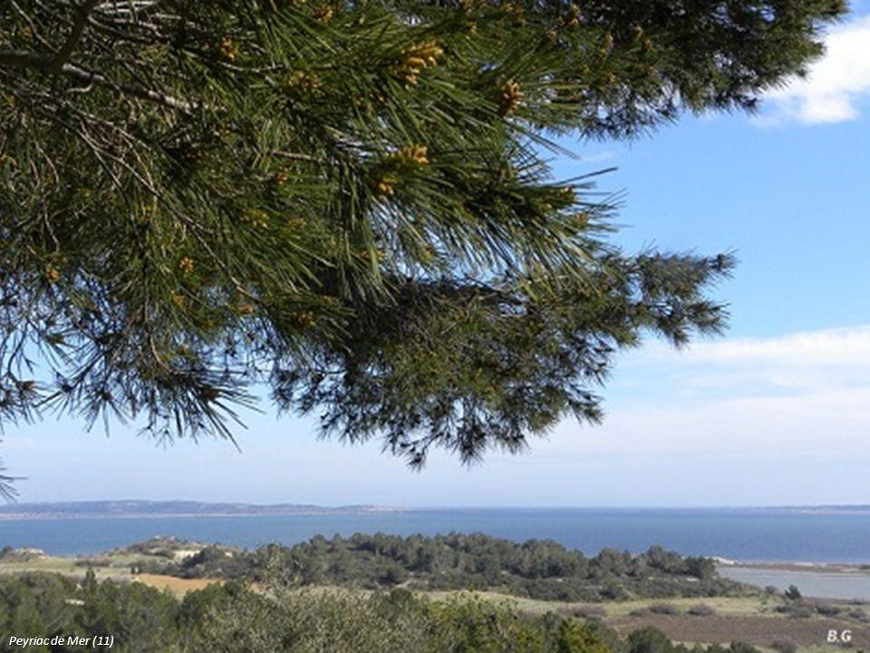 Peyriac de Mer (11)