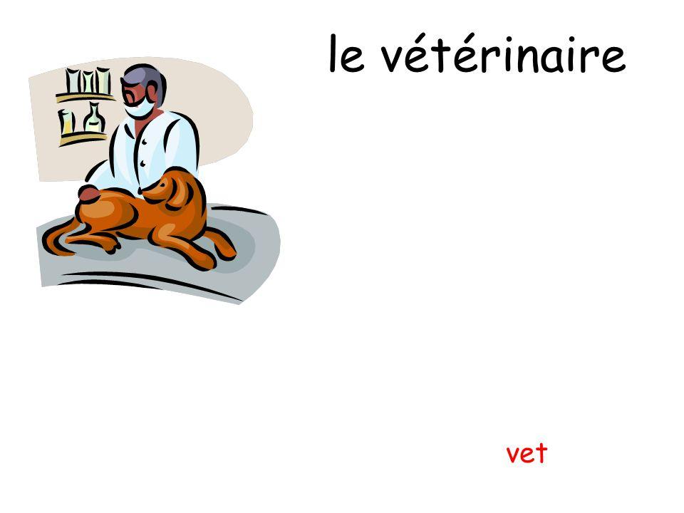 le vétérinaire vet