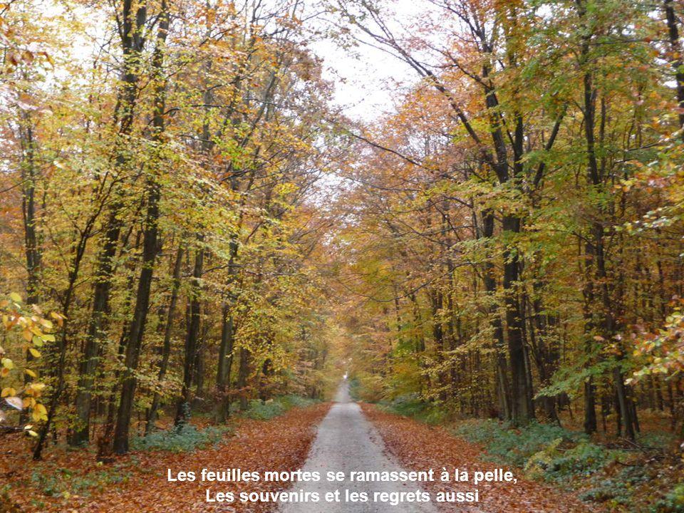 Les feuilles mortes se ramassent à la pelle, Les souvenirs et les regrets aussi