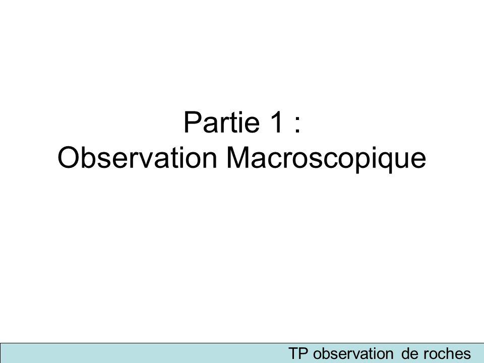 Partie 1 : Observation Macroscopique