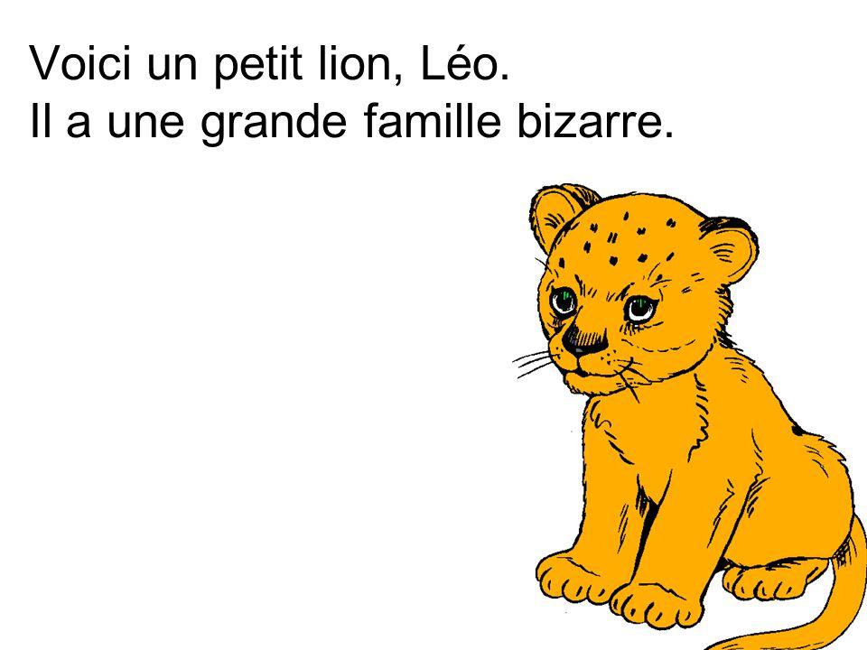 Voici un petit lion, Léo. Il a une grande famille bizarre.