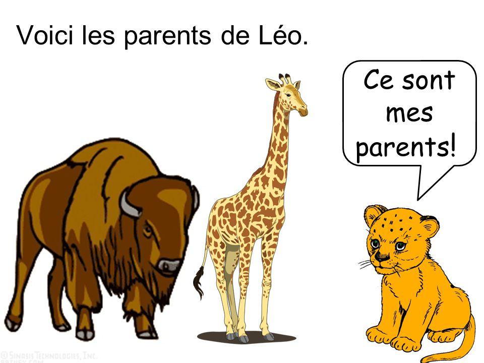 Voici les parents de Léo.