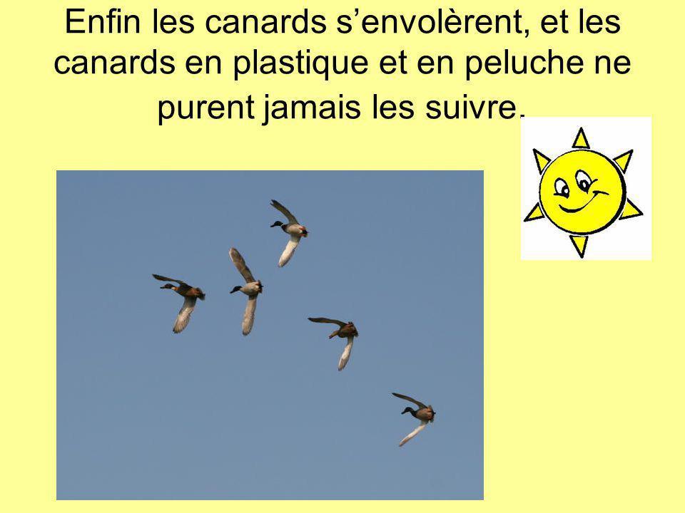 Enfin les canards s'envolèrent, et les canards en plastique et en peluche ne purent jamais les suivre.