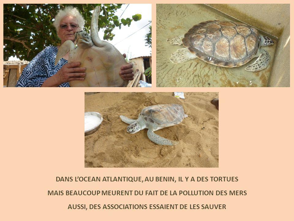 DANS L'OCEAN ATLANTIQUE, AU BENIN, IL Y A DES TORTUES